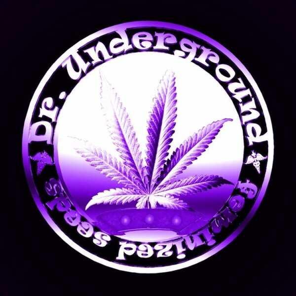 Dr. Underground